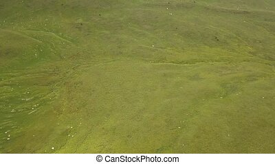Herd of horses running on summer pasture in mountain valley aerial view
