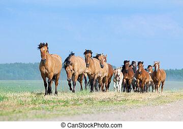 Herd of horses runs in pasture