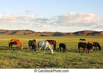 Herd of horses in the mongolian prairie