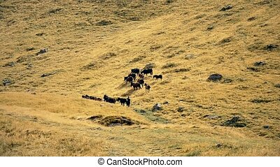 Herd of horses with herdsman and dog on pasture