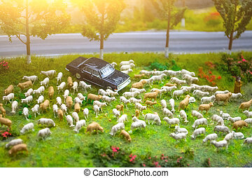 Herd of minimal sheep on a meadow by the road with a parked car.