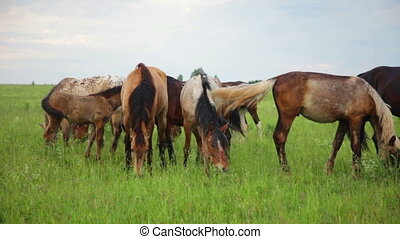 Herd of running horses - Herd of horses in the pasture