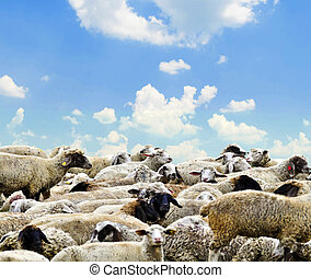 Herd of sheep against bright blue sky