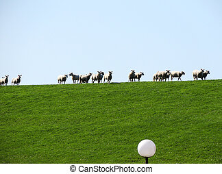 Herd of sheep grazing on the slope