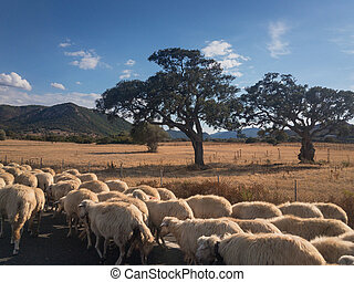 Herd of sheeps on a road in Sardinia
