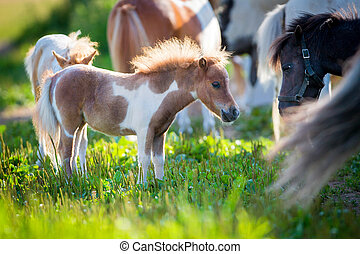Herd of small horses