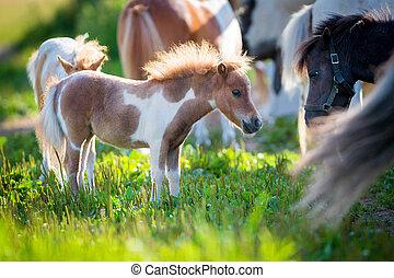 Herd of small horses - Herd of small cute horses in pasture