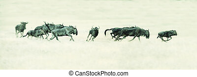 Herd of Springbok running on a plain in Kalahari artistic conversion