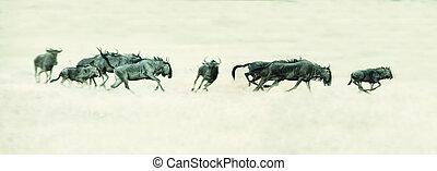 Herd of Springbok running on a plain in Kalahari artistic conversion
