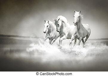 Herd of white horses