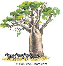 Herd of zebras under a baobab