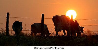 herd silhouette