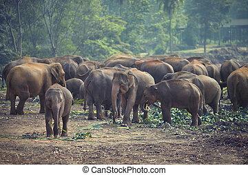 herde elefanten, an, essenszeiten