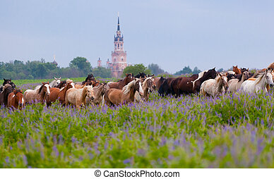 herde pferde, gleichfalls, weiden lassen, früh morgens, auf, a, wiese