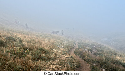 herder and horses in fog - autumn fog in the hills with...