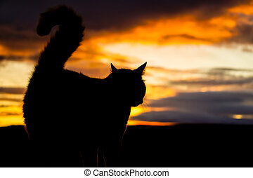 profil of a cat with a dramtic sky in background. - Here you...