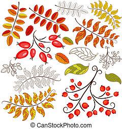 herfst, abstract, verzameling, element