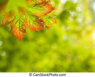 herfst, achtergrond, herfst