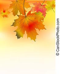 herfst, achtergrond, met, de bladeren van de esdoorn