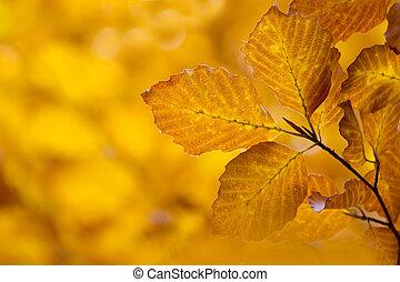 herfst, bladeren