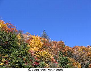 herfst, bomen