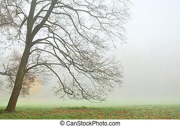 herfst, boompje, leafless, dicht, mist