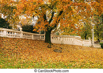 herfst, boompje, met, kleurrijke, bladeren, in park