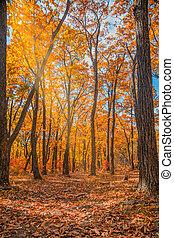 herfst bos, alles, de, gebladerte, is, geverfde, met,...