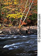 herfst, bos, en, rivier landschap