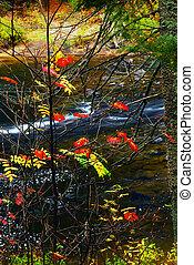 herfst, bos, en, rivier