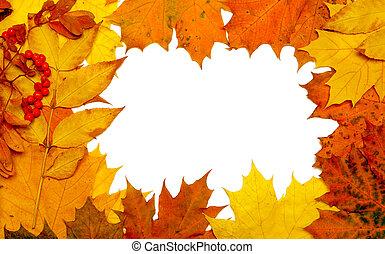 herfst, dalingsblad, frame