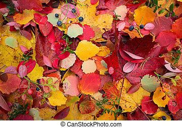 herfst, dalingsbladeren, achtergrond