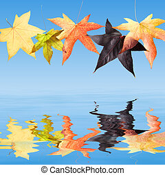 herfst, dalingsbladeren