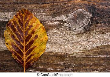 herfst, eenzaam, hout, blad, achtergrond