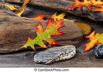 herfst, eik, oud, blad, drijfhout