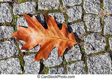 herfst, eik, steen, blad, bestrating