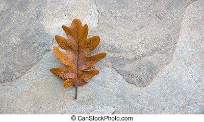 herfst, eik, steen, blad, enkel
