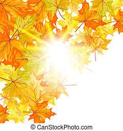 herfst, esdoorn