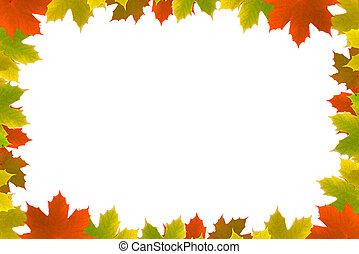 herfst, esdoorn, vellen, achtergrond