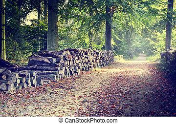 herfst, footpath, bos