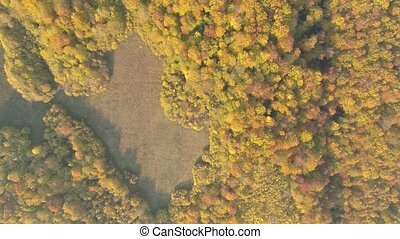 herfst, forest., vliegen over