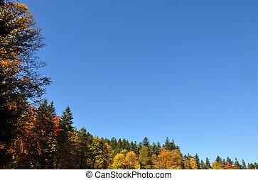 herfst, frame, met, de ruimte van het exemplaar