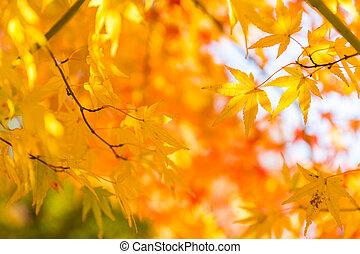 herfst, gekleurde, bladeren
