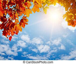 herfst, gele bladeren, in, zonnestralen