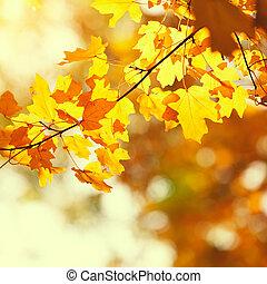 herfst, gele bladeren