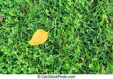 herfst, groen gras, blad, gele