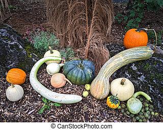 herfst, groentes, versiering, tuin