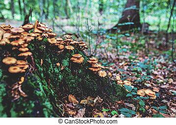 herfst, groep, logboek, foto, gele, forest., sinaasappel, oud, paddestoelen