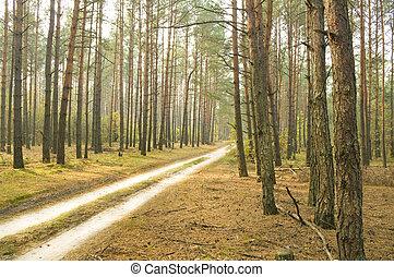 herfst, hout, straat
