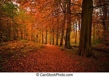herfst, in, de, bos
